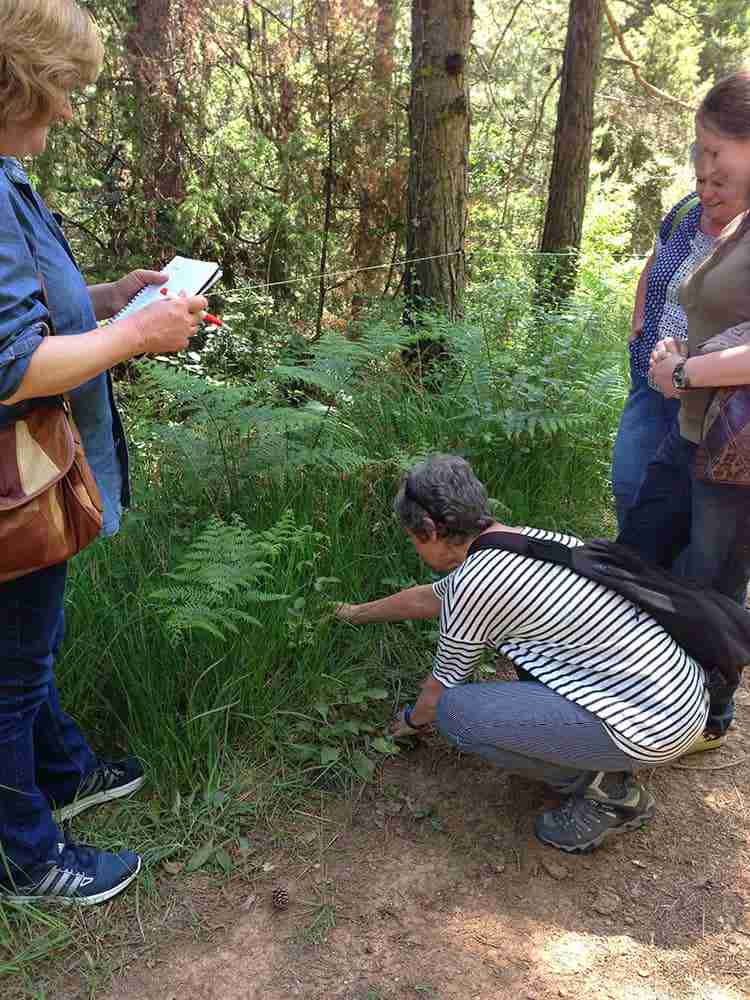 Herb Walk Course Workshop Aude