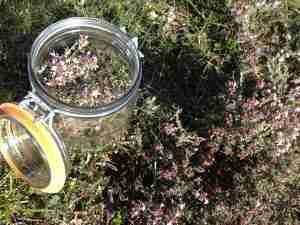 thymus vulgaris southern france