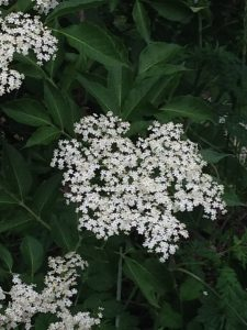 elderflower cordial, wine or liqueur